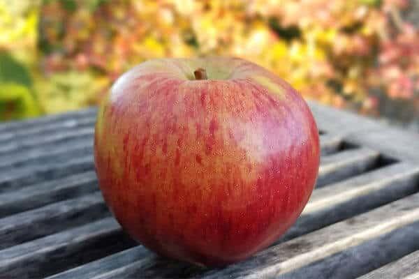 تفسير رؤية التفاح في المنام ودلالات أكل التفاح الأحمر والأخضر إنفو زاد